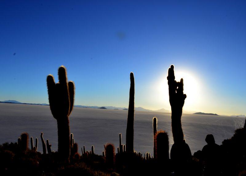 Inca Island Cactus'