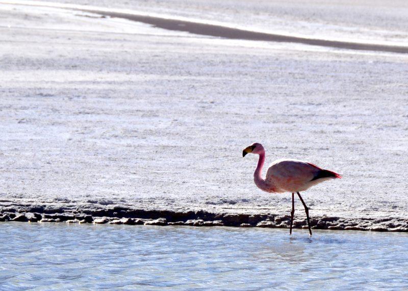 Flamingo!