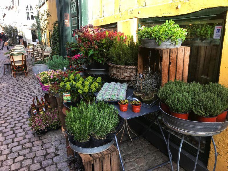 Plants in Copenhagen