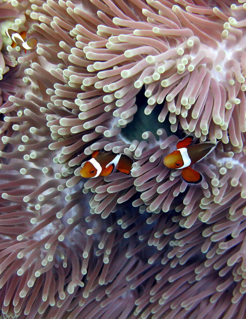 Finding Nemo in real life