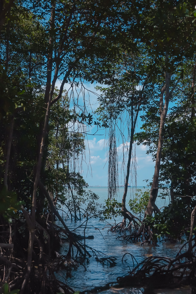 Pulau Ubin: the wetlands