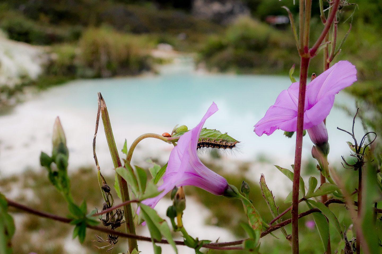 off the beaten track: purple flowers in North Sumatra