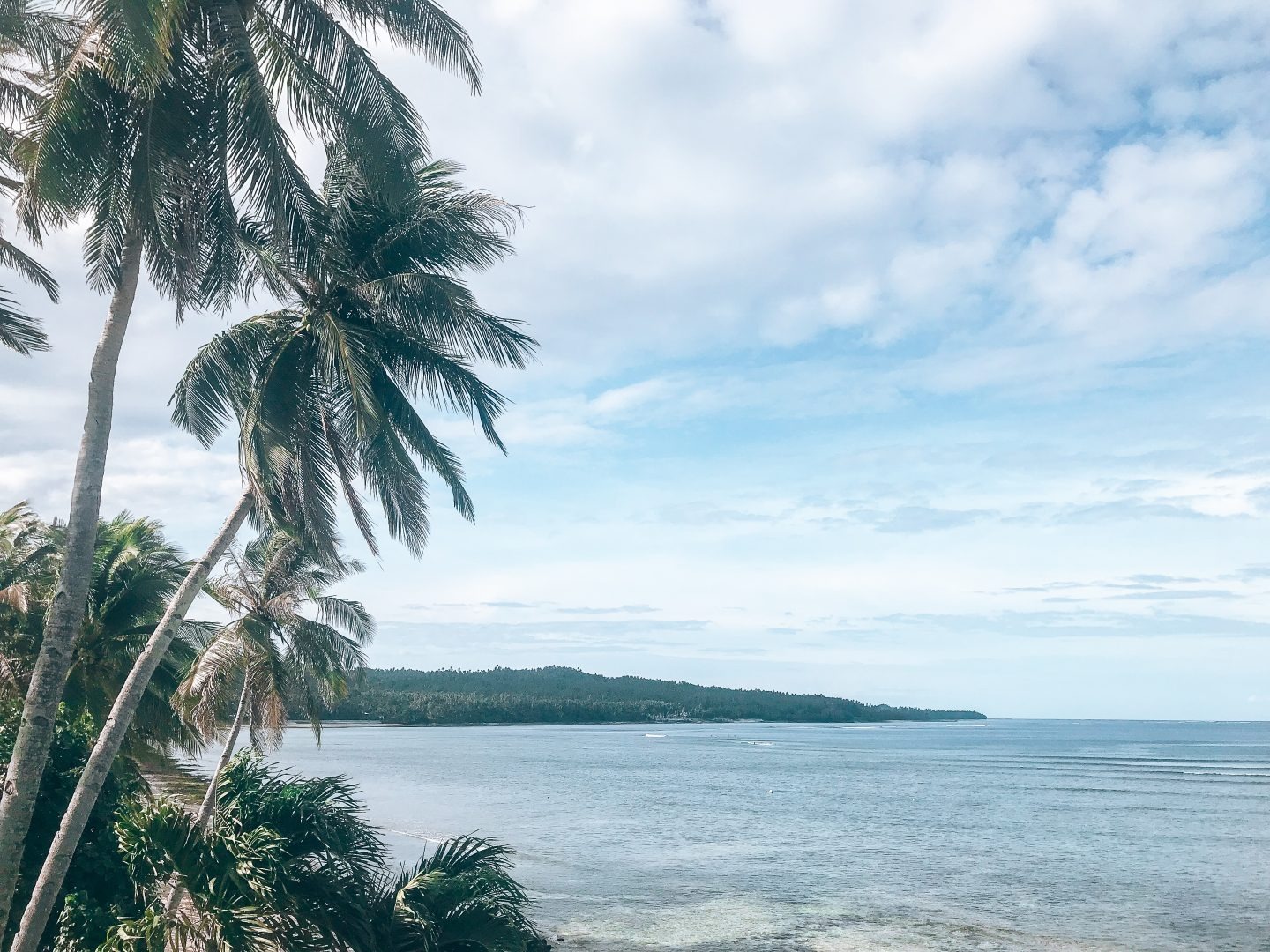 Views of Siargao with palm trees