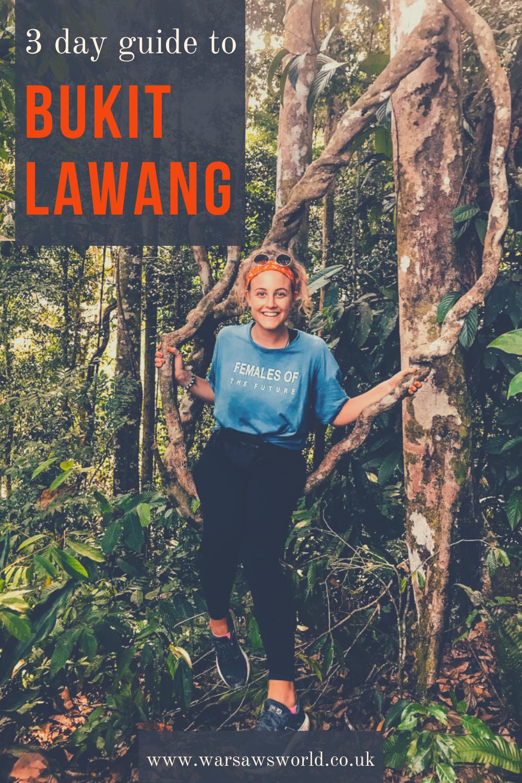 a 3 days guide to Bukit Lawang